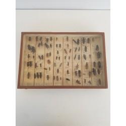 Cadre de coléoptères
